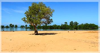 VOI FIKASOA - forêt de mangroves